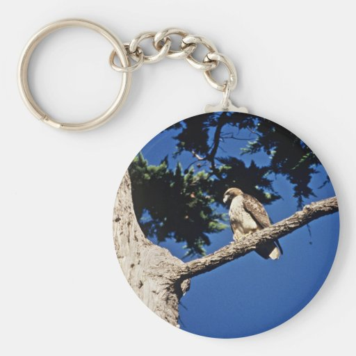 Red-tailed Hawk, immature Key Chain