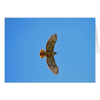 Red-Tailed Hawk in Flight Greeting Cards