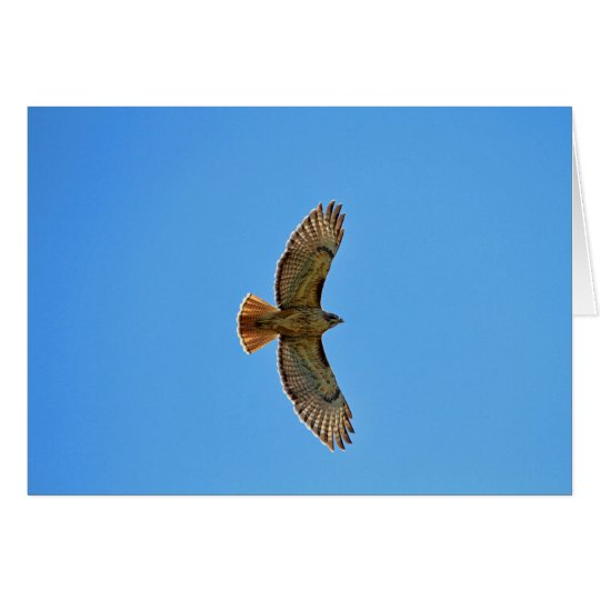 Red-Tailed Hawk in Flight Card