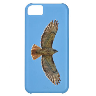 Red-Tailed Hawk in Flight iPhone 5C Cases