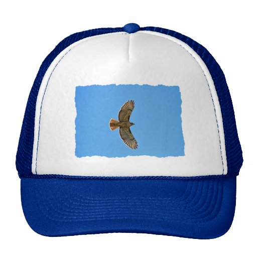 Red-Tailed Hawk in Flight Hat