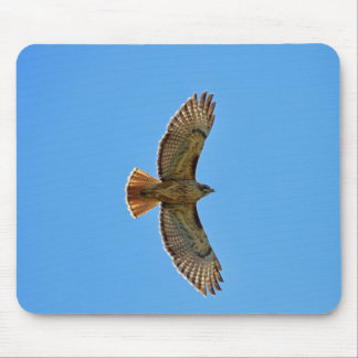 Red-Tailed Hawk in Flight Mouse Pad