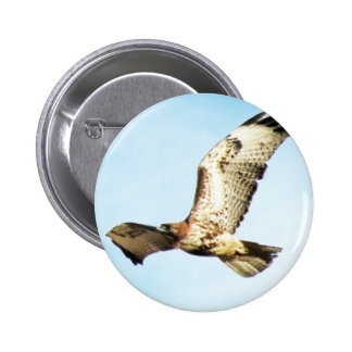Red-tailed Hawk in Flight Photo Pinback Button