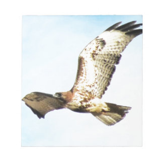 Red-tailed Hawk in Flight Photo Scratch Pads