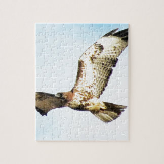 Red-tailed Hawk in Flight Photo Puzzle