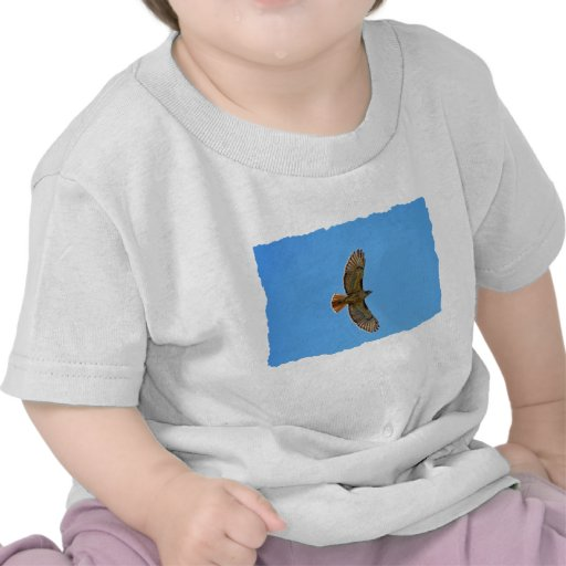Red-Tailed Hawk in Flight Shirt