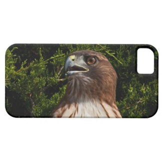 Red-tailed Hawk iPhone 5 case
