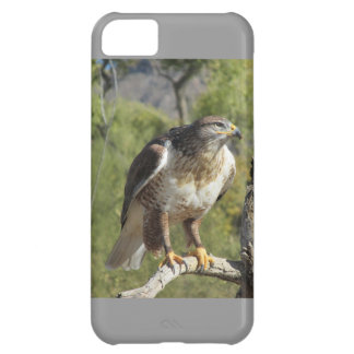 Red Tailed Hawk iPhone 5 Case