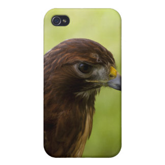 Red Tailed Hawk Cases For iPhone 4