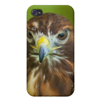 Red Tailed Hawk Iphone Cover Covers For iPhone 4