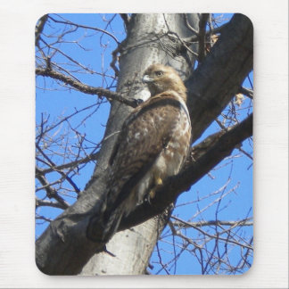 Red Tailed Hawk (Juevenile) Mouse Pad