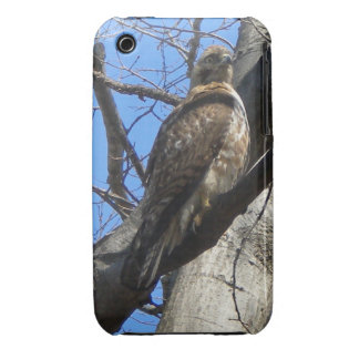 Red Tailed Hawk (Juvenile) iPhone 3 case