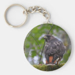 Red-Tailed Hawk Key Chains
