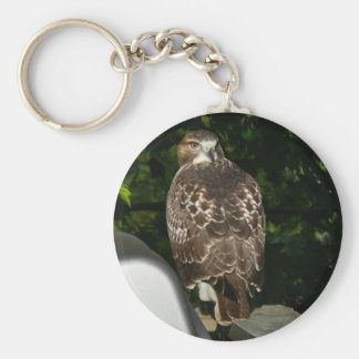 Red tailed Hawk Keychain