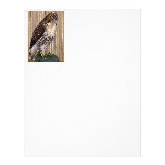 Red-Tailed Hawk Letterhead