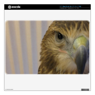 Red-tailed hawk MacBook skin