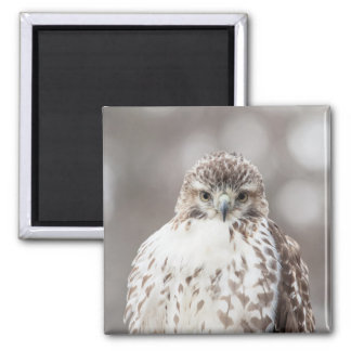 Red Tailed Hawk Refrigerator Magnet