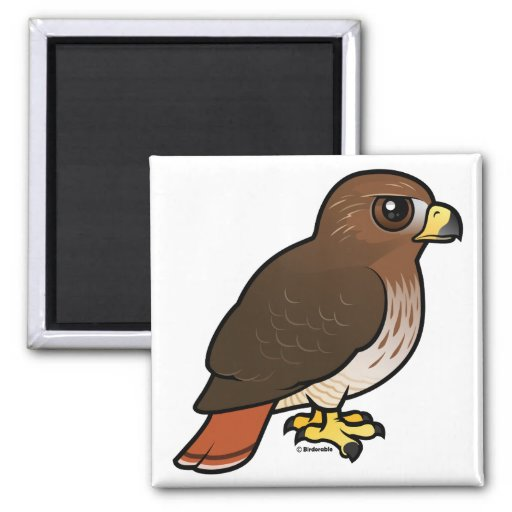 Red-tailed Hawk Fridge Magnets