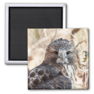Red Tailed Hawk Fridge Magnet