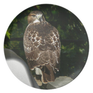 Red tailed Hawk Melamine Plate