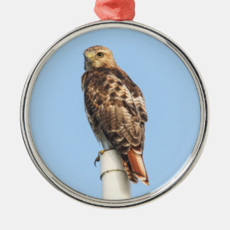Red-tailed Hawk Metal Ornament