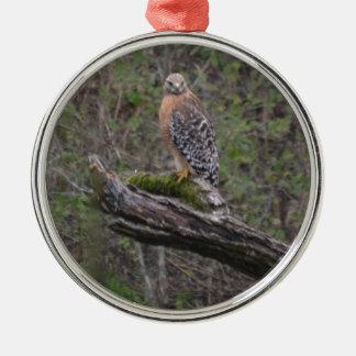 Red Tailed Hawk on Limb Metal Ornament