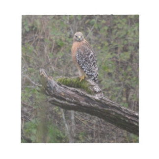 Red Tailed Hawk on Limb Memo Note Pad