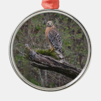 Red Tailed Hawk on Limb Round Metal Christmas Ornament