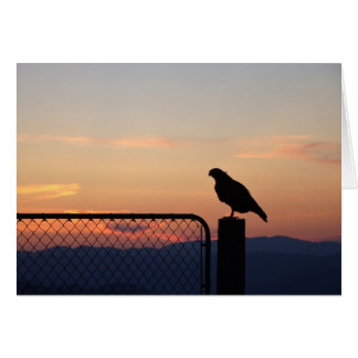 Red-tailed Hawk on Post at Sunset Card