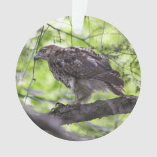 Red-tailed Hawk Ornament