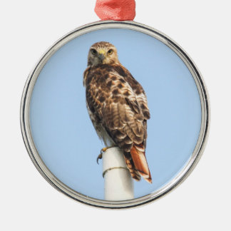 Red-tailed Hawk Christmas Tree Ornaments
