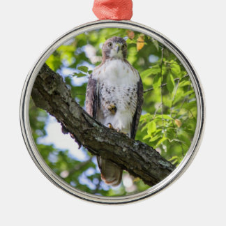 Red-tailed Hawk Christmas Tree Ornament