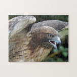 """Red-tailed Hawk Photo 252 Piece Jigsaw Puzzle<br><div class=""""desc"""">Animal themed,  252 piece jigsaw puzzle that features the photo image of a Red-tailed Hawk. Puzzle size is 11 x 14 inches. Fun for the whole family! To see other products offered in the store,  click on the Northwestphotos store link.</div>"""