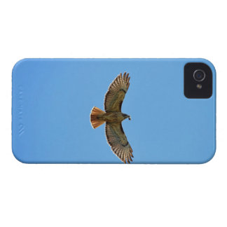 Red-Tailed Hawk Photo Blackberry Case