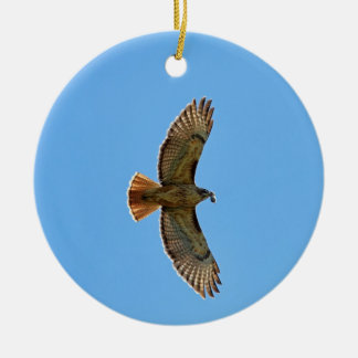 Red-Tailed Hawk Photo Ornaments