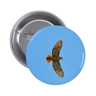 Red-Tailed Hawk Photo Pinback Button