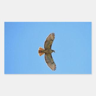 Red-Tailed Hawk Photo Rectangular Sticker