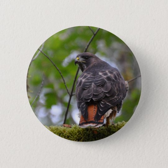 Red-Tailed Hawk Pinback Button