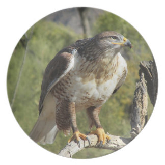 Red Tailed Hawk Plate
