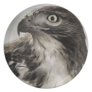 Red-tailed Hawk Plate