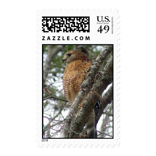 Red Tailed Hawk Postage