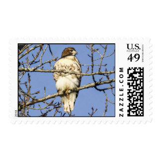Red-tailed Hawk Stamp