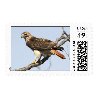 Red-tailed Hawk Postage