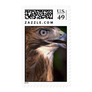 Red tailed hawk stamps
