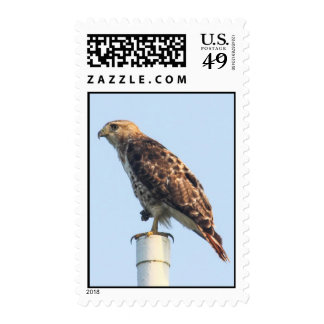 Red-tailed Hawk Postage Stamp