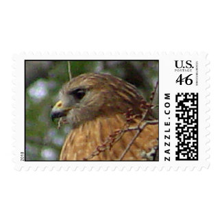 Red Tailed Hawk Postage 2