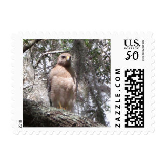 Red Tailed Hawk Postage Stamp