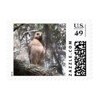 Red Tailed Hawk Postage Stamp Postage Stamps