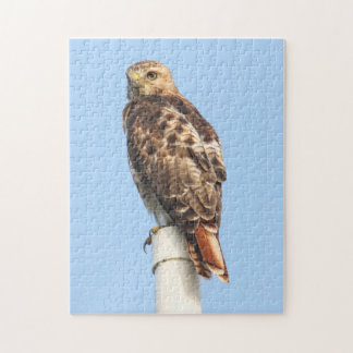 Red-tailed Hawk Jigsaw Puzzles