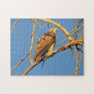 Red Tailed Hawk Jigsaw Puzzle